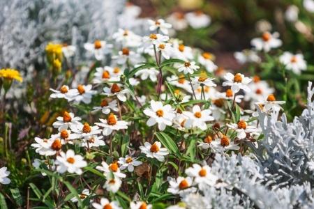 Szukasz inspiracji? Poznaj trendy ogrodnicze 2021!
